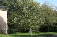 El bosc del darrera de la casa rural