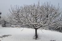 L'entorn vestit de blanc