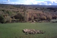 Overview of sheep