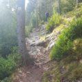 Pedraforca-bosc-casa-rural